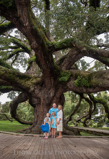 We did a family portrait of the Easterling family before the rain hit on Thursday in town. The Treaty Oak is an octopus-like Southern live oak in Jacksonville, Florida. The tree is estimated to be 250 years old and may be the single oldest living thing in Jacksonville, predating the founding of the city by Isaiah Hart during the 1820s