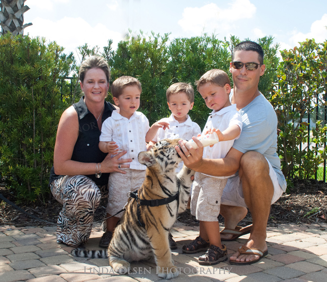 """Nelson and I donated our time photographing families with a 3 month old siberian tiger. Everyone donated to this wonderful non profit educational facility located in Melrose, Florida. SINGLE VISION mission is to educate the public on the dangers our exotic wildlife face in the wild. Evidently there are 3000 of these beautiful tigers in the wild worldwide and 4000 in captivity (zoos and wildlife parks and preserves). Single VIsion cares for and offers the big cats and are active in preservation efforts. Baby """"Summer"""" at three months weighs 30 lbs and is about 4 feet long and VERY strong and healthy. Single Vision adopted her recently and she is obviously well cared for. Photographing the various families was a challenge since like a baby human, you cannot make the tiger pose or be in one spot so I was on my knees and back following her around and then quickly encouraging the families to pose around her without spooking her. SUmmer will gain a half pound a day and at age two, will be grown to around 600 pounds. At 40 pounds, no one will be allowed to pet her. Even at 30 lbs, her strength was amazing. She would growl and hiss and pounce sometimes and we had to back away. Her paws were huge already as you can see. The hosts, Amy and Greg with their 3 year old triplet boys got to feed her a bottle of formula. Contact Single Vision on www.facebook.com/Single Vision/  or call 904-377-7993 for information."""