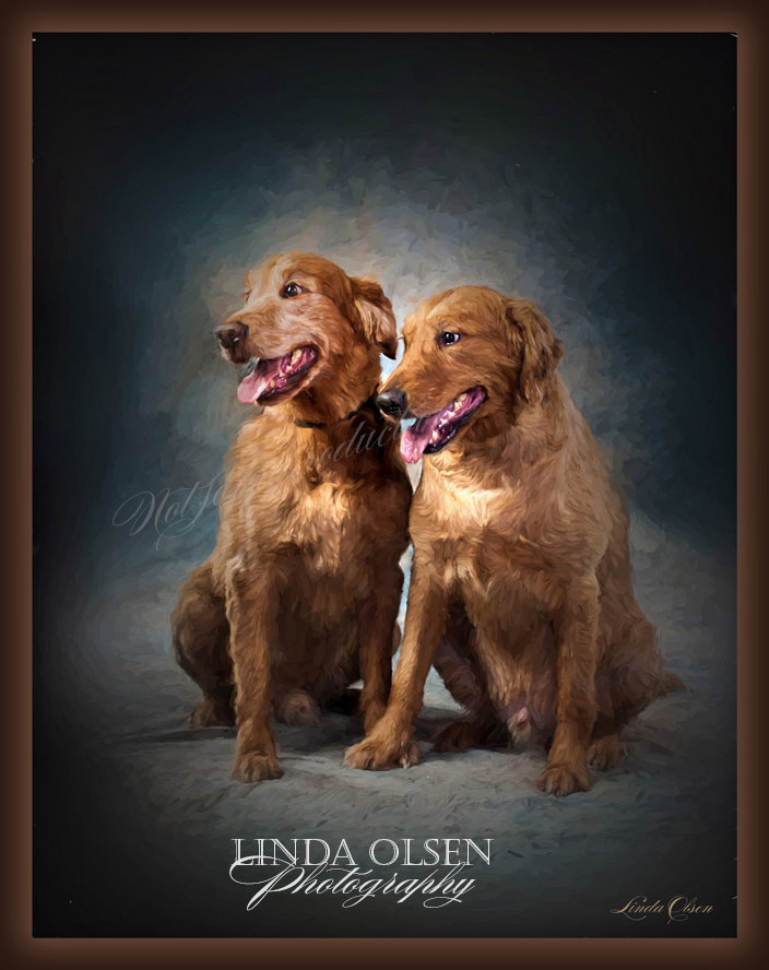 In order to create this digital painting in the style of oil brushstrokes, I first had to eliminate the leashes and hands steadying the large retrievers. Once that was done, I could create the painting. The image is then printed on canvas and I do acrylic brush strokes and varnish.